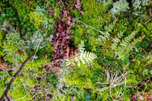 mosses and ferns, February 2019